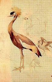Riquer Dibuix Estudi d'ocells